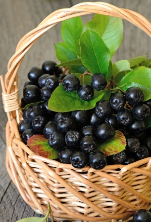 Black chokeberry  Aronia melanocarpa  in the basket on wooden table photo