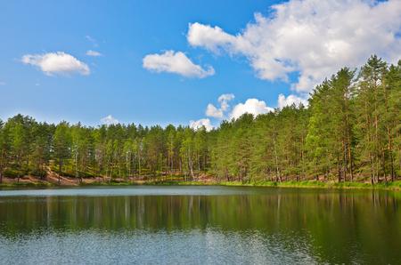 Pines on lake near Saint Petersburg, Russia