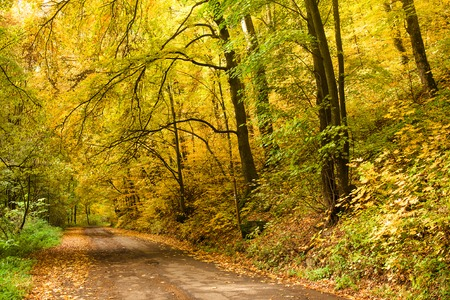 Road in the autumnal on a forest. Stock Photo