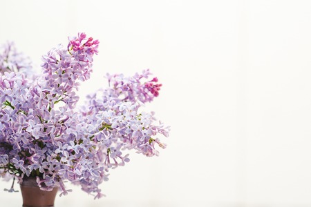 The beautiful lilac on the white background. Stock Photo