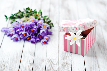 brightness: Beautiful crocus flowers and gift box on the wooden background.