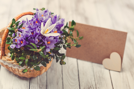 Beautiful crocus flowers in a basket near empty card for your text on the wooden background. Toned.
