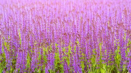 Beautiful purple flowers. Summer flower bed outdoors. Violet flowers in sunny day