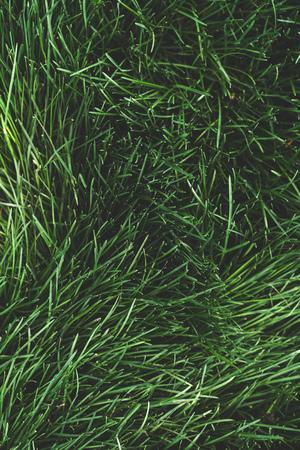 Green grass natural background texture. Summer grass, top view. Фото со стока