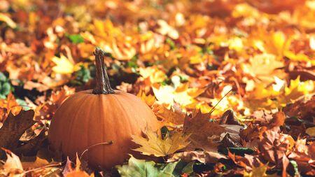 Thanksgiving Day. Autumn holidays. Autumn leaves background. Pumpkin. Beautiful sunny autumn day. Autumn weather.