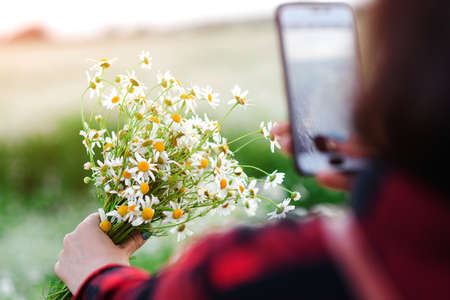 Woman takes picture a bouquet of daisies at nature. Female walking on flowers field at sunset. Woman using mobile phone photographs flowers. People, lifestyle and technology Banque d'images