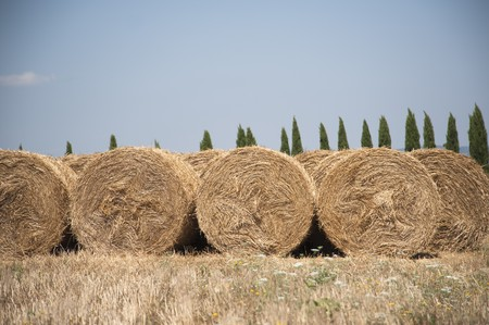 dry grass in italy photo