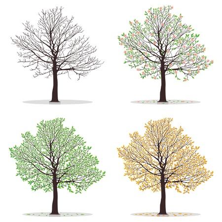 �rboles con pajaros: Cuatro estaciones: primavera, verano, oto�o, invierno. Arte hermoso para el dise�o de su �rbol. Ilustraci�n vectorial Vectores