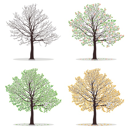 cartoon birds: Four seasons - spring, summer, autumn, winter. Art tree beautiful for your design. Vector illustration