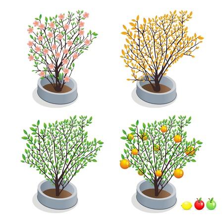trees in pots Stock Vector - 14617208