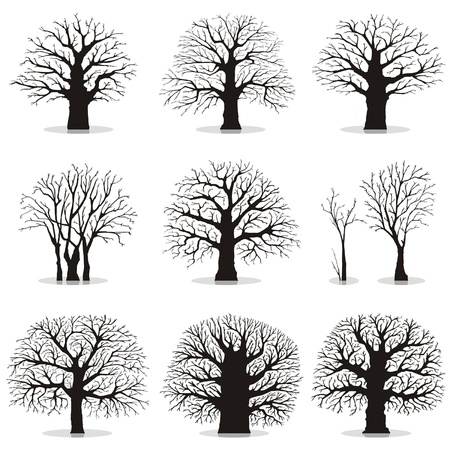 birch: Collection of trees silhouettes Illustration