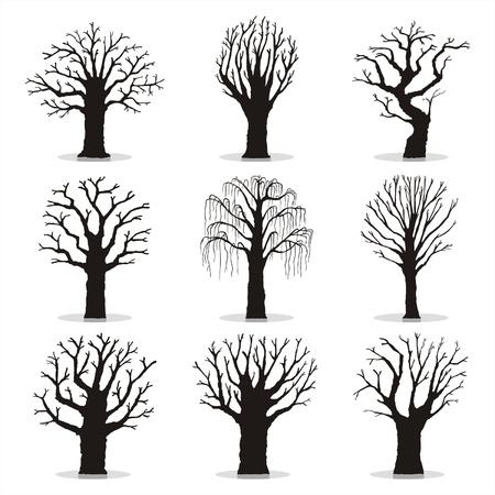 arbol alamo: Colecci�n de siluetas de �rboles Vectores