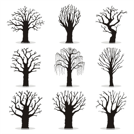 Collection of trees silhouettes Stock Vector - 17687303