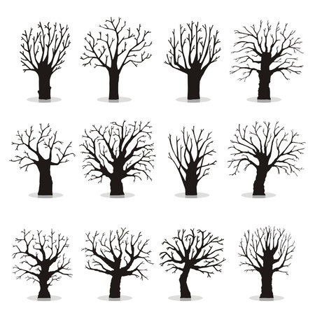 Collection of trees silhouettes Stock Vector - 18873523