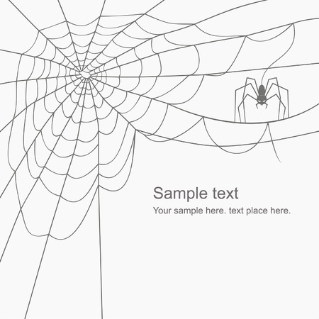 spinnennetz: Vektor-Spinnennetz Illustration