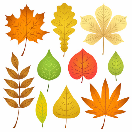 autumn leaves collection Stock Vector - 43790606