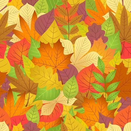 aronia: seamless with autumn leaves on white background