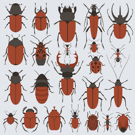 barbel: Beetles set