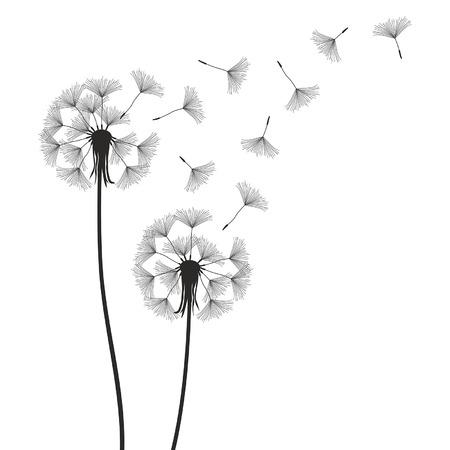 pistil: dandelion