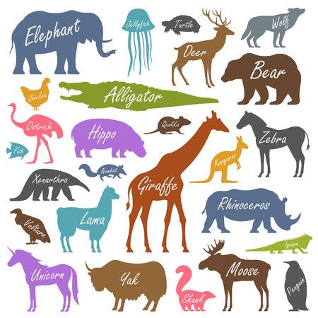 animal alphabet: Animal alphabet poster for children