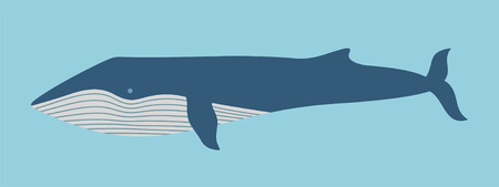 Blue Whale Stock Vector - 85335923