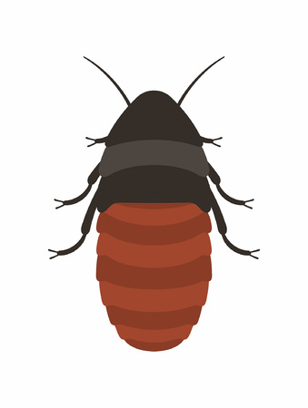 Cockroach Vector illustration.
