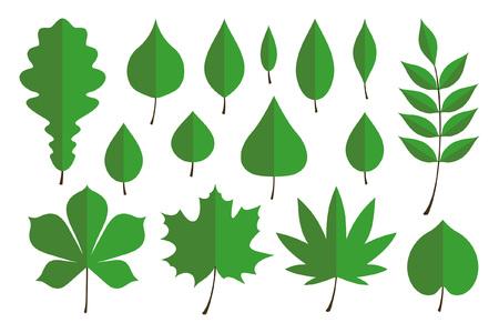 Set of green autumn leaves. flat style. isolated on white background Illustration