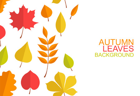 Autumn leaves background. flat style. isolated on white background