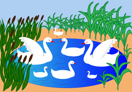 swans: Family of swans swimming in a pond Illustration
