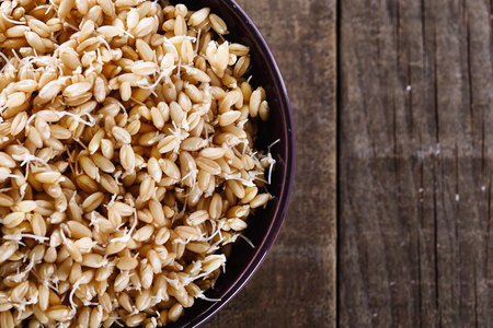 sprouted: Sprouted wheat germ in a bowl over rustic wooden background. Closeup, copy space Stock Photo