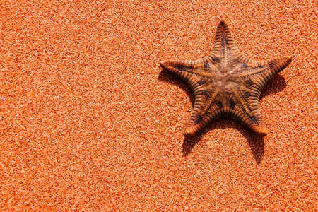 Single starfish is on the sand background photo