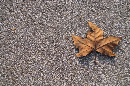 Photo of a dry leaf laying on concrete Stock Photo - 9056590