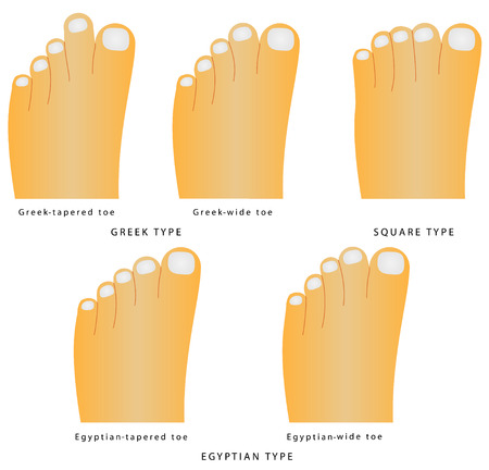 Toe shape  Types of foot shape - the most common variants of the foot and toes on white background Illustration