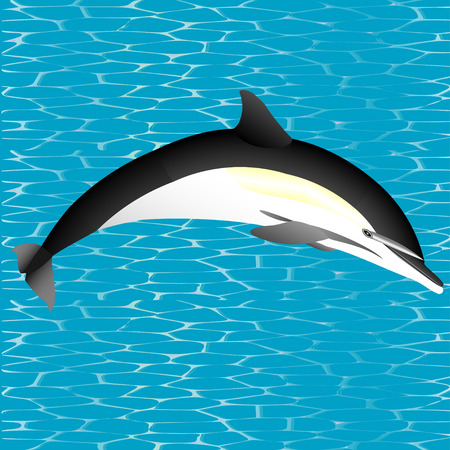 breach: Orca  Killer whale jumping out of water  Illustration