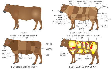 55159027 beef chart cuts of beef beef cuts diagram beef meat cuts meat cutting beef scheme of the template be?ver\=6 cow butcher diagram cuts trusted wiring diagram