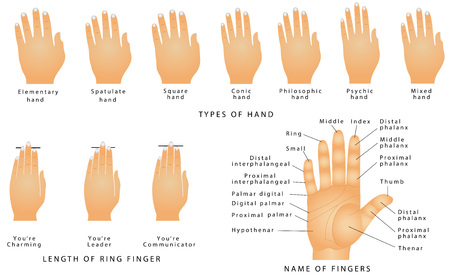 proximal: Names of the Fingers. Types of hands. Types of hands In Palmistry. Ring Finger Type - Your Personality. Name of fingers on a hand. Right hand with lines and their names on white background