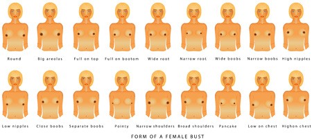 여성 흉상의 형태. 흰색 배경에 다른 크기의 여성입니다. 광고 및 의료 출판물을 위한 여성의 전면 모습. A에서 F까지 흉상 크기 벡터 (일러스트)