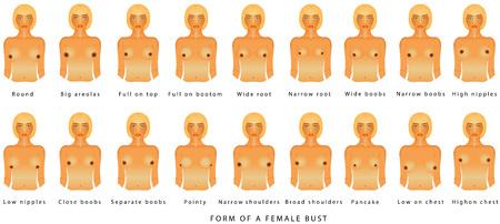 Vorm van een vrouwelijke buste. Vrouw van verschillende grootte op een witte achtergrond. Vooraanzicht van de vrouw voor reclame en medische publicaties. Maten van bustes, van A tot F Vector Illustratie