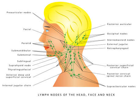 Lymphatic drainage. Lymph nodes of the head, face and neck. Retro pharyngeal lymph nodes. Medical illustration depicting the lymphatic system in the head, face and neck Illustration