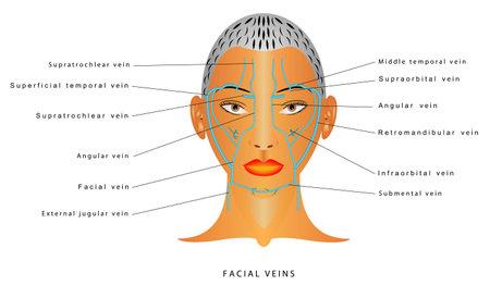 Facial veins. Venous Drainage of Face. Human facial veins.