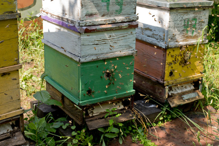 colorful beehives in the lush garden. Honey-bee colony guards the hive from looting honeydew. Bee-guard in the beehive entrance. Swarm hived readily