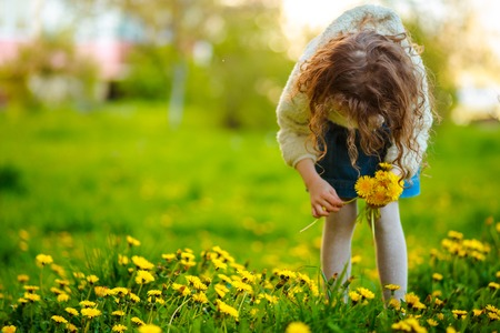 The girl collects dandelions in the clearing. child with curly hair. The child collects a bouquet of dandelions for a wreath.