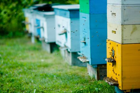 Six honey bee hives in the apiary during the summer honey harvest. Evening in the apiary. Bees are returning to the hives. A lot of bees in flight. Zdjęcie Seryjne