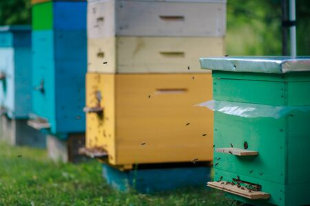 Different hives in the apiary. Single and multiple hives. Green single body hive and returning bees. Zdjęcie Seryjne