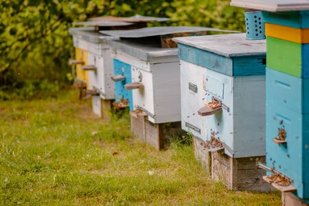 Apiary in the evening. Return to the bee hives before night. Evening honey collection. New dadanovskie hives in the apiary.