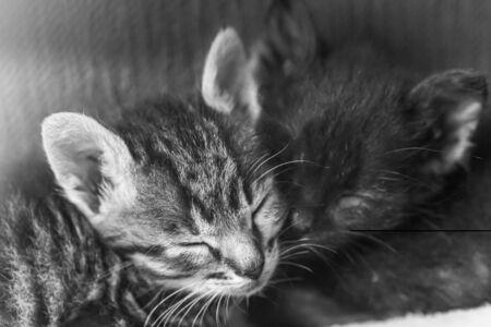 Two little sibling kittens sleep side by side. Cute kitten fed by a man. Sleeping babies kittens.