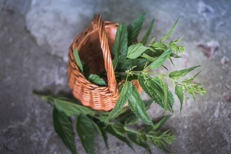 Collected in an environmentally friendly place nettles. Nettle bush in a wicker basket. Place for text. Copy space Imagens