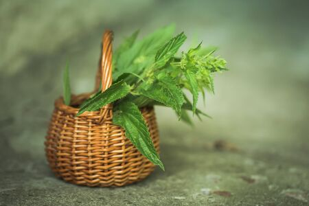 Collected in an environmentally friendly place nettles. Nettle bush in a wicker basket. Place for text. Copy space Zdjęcie Seryjne