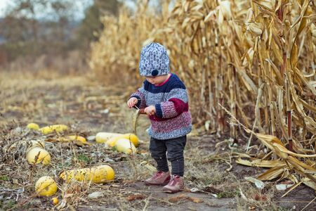 Beautiful baby in warm stylish sweater standing in middle of corn field. Harvest time. organic agriculture for children. Cute child on a foggy autumn evening outdoor. Happy children day concept