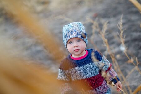 Portrait of a toddler child looking up through ripe corn on the field. Harvest time. organic agriculture for children. Cute child on a foggy autumn evening outdoor. Happy children day concept Stok Fotoğraf